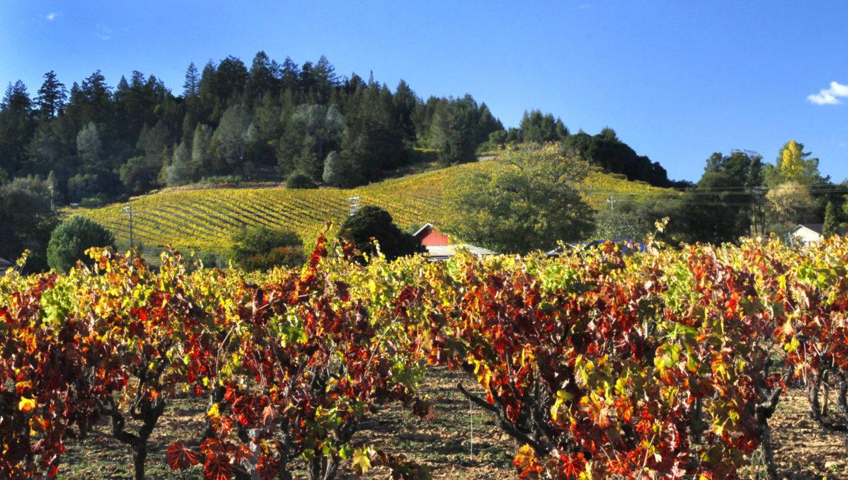 Hills & Vines