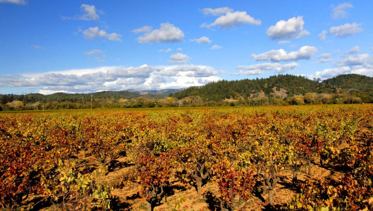 Vineyard to North Hills