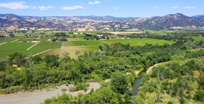 Vineyard on the Russian River in Alexander Valley